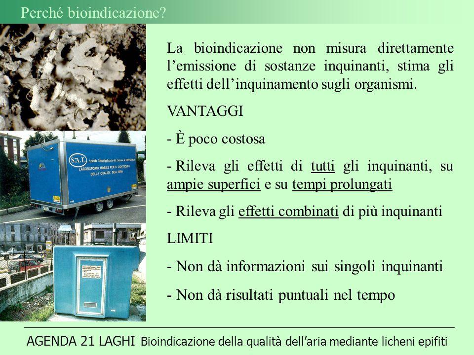 AGENDA 21 LAGHI Bioindicazione della qualità dellaria mediante licheni epifiti Perché bioindicazione.