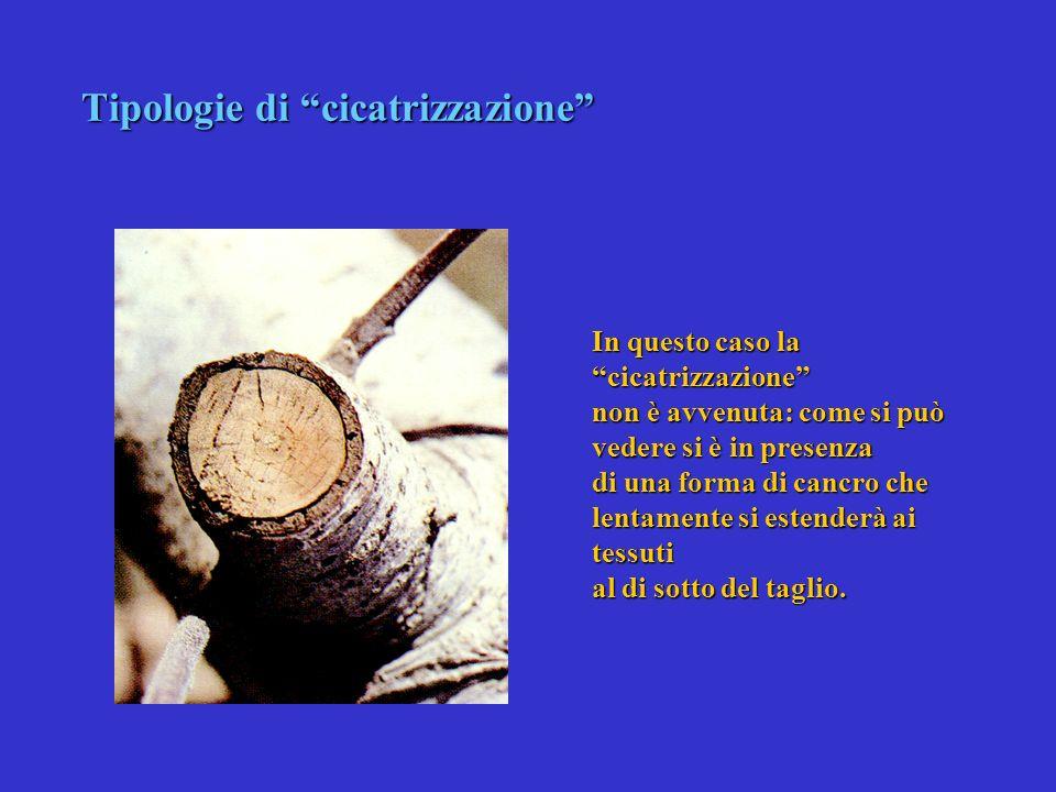 9 LA CICATRIZZAZIONE LE BARRIERE La Cicatrizzazione (??, meglio crescita di nuovi tessuti) riguarda esclusivamente i tessuti cambiali Le Barriere rigu