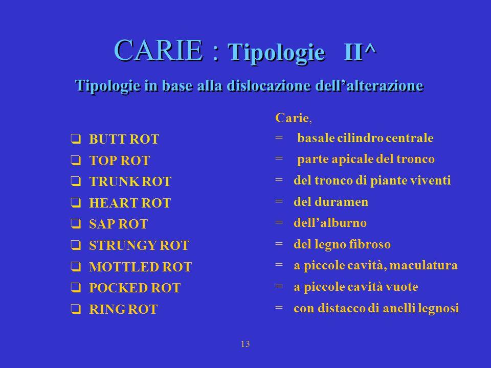 12 CARIE : Tipologie I^ TIPOLOGIE in base alla sostanza attaccata a) CARIE BIANCA : legno di colore chiaro, consistenza fibrosa,spugnosa principalment