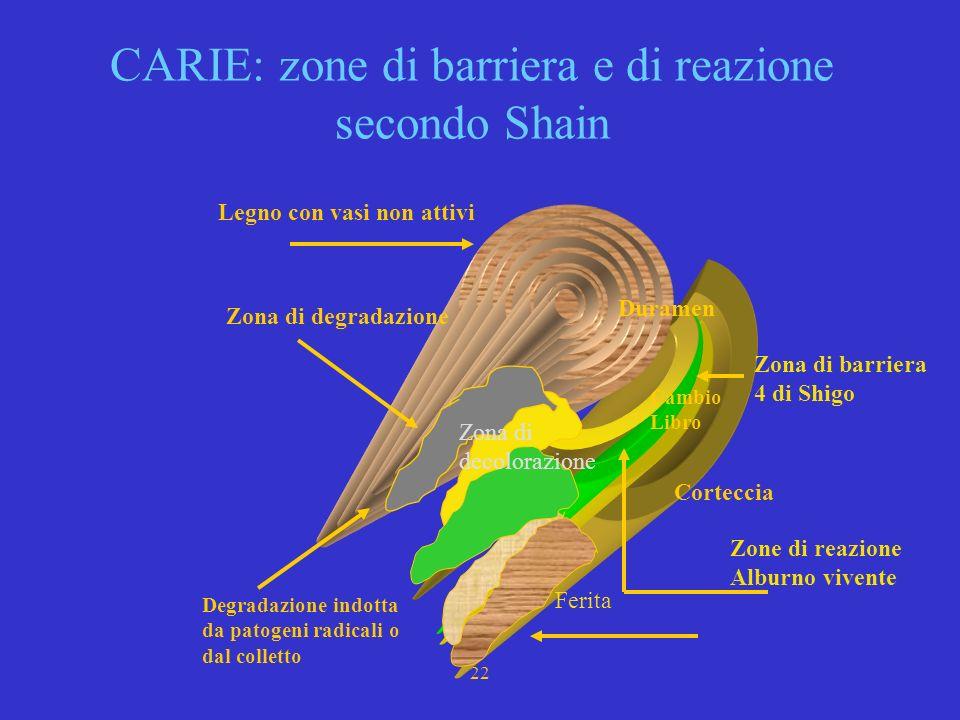 20 CARIE : CODIT II^ La II^ si deve a SHAIN (1967,1971,1979), essa è basata sulla individuazione di zone di barriera e zone di reazione oLe zone di ba