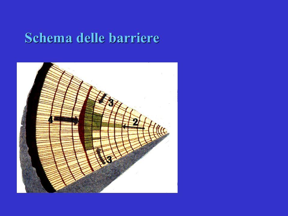 22 CARIE: zone di barriera e di reazione secondo Shain Duramen Cambio Libro Corteccia Ferita Zona di decolorazione Legno con vasi non attivi Zona di d