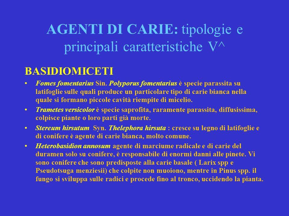 AGENTI DI CARIE: tipologie e principali caratteristiche IV^ BASIDIOMICETI Pholiota destruens, Agrocybe aegirita (piopparello), sono entrambe agenti di