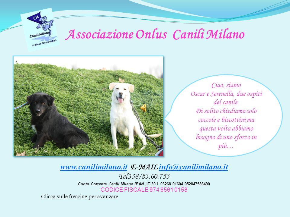 Ciao, siamo Oscar e Serenella, due ospiti del canile.