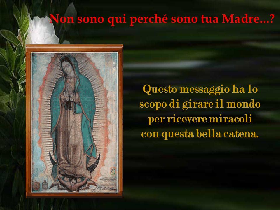 Cari fratelli, prima di tutto voglio dirvi che la Vergine di Guadalupe è buona e miracolosa e ci accompagna sempre in ogni luogo. Non sono qui perché