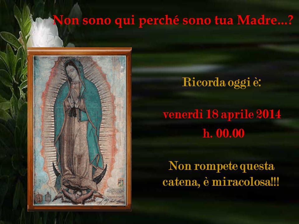 Devi fare quante più copie puoi e in cambio riceverai una prova della Vergine, per quanto impossibile possa sembrare. Non sono qui perché sono tua Mad
