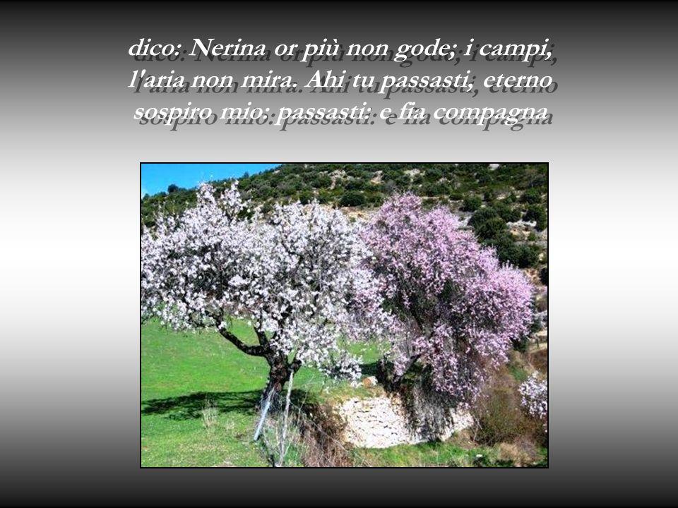 dico: Nerina or più non gode; i campi, l aria non mira.