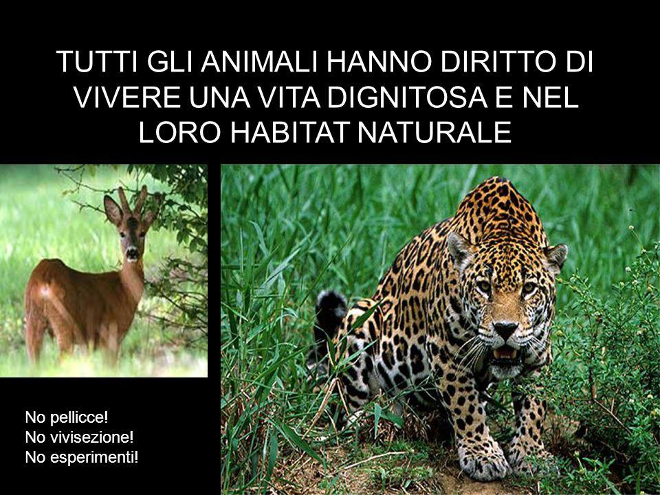 TUTTI GLI ANIMALI HANNO DIRITTO DI VIVERE UNA VITA DIGNITOSA E NEL LORO HABITAT NATURALE No pellicce! No vivisezione! No esperimenti!