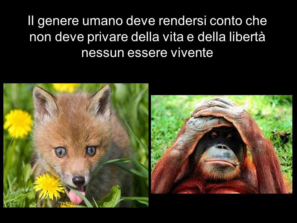 Il genere umano deve rendersi conto che non deve privare della vita e della libertà nessun essere vivente