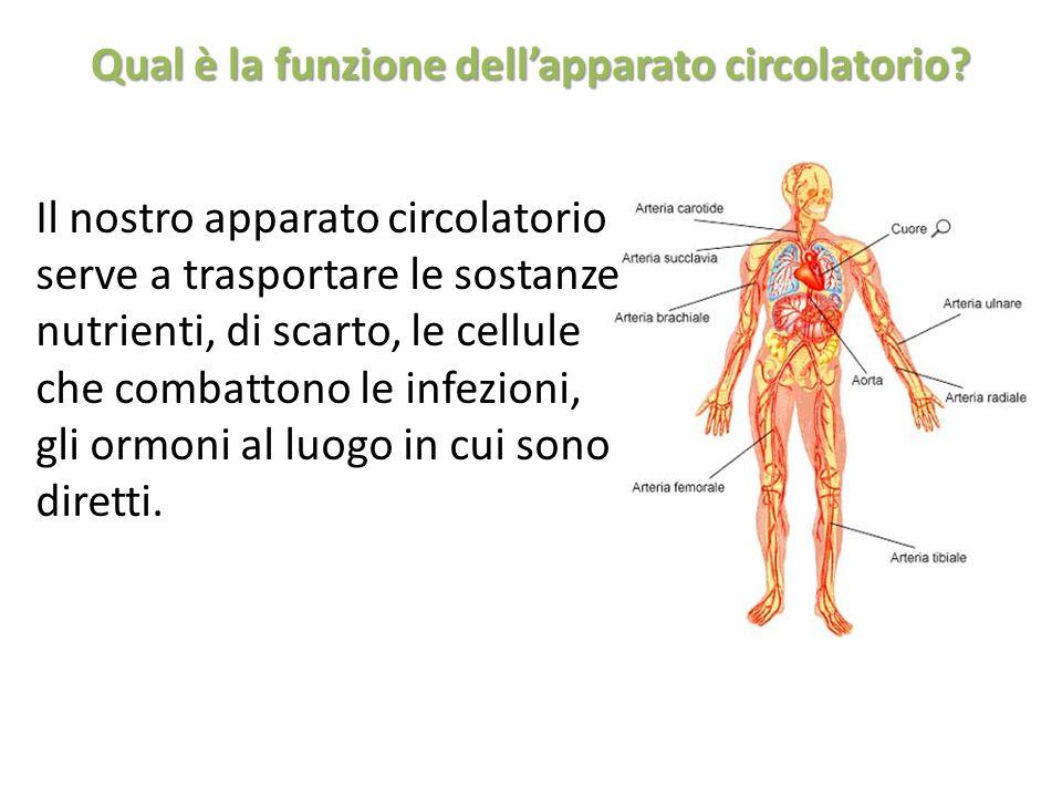 Qual è la funzione dellapparato circolatorio? Il nostro apparato circolatorio serve a trasportare le sostanze nutrienti, di scarto, le cellule che com