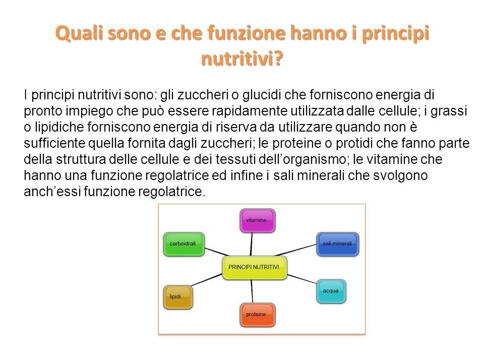 Quali sono e che funzione hanno i principi nutritivi? I principi nutritivi sono: gli zuccheri o glucidi che forniscono energia di pronto impiego che p
