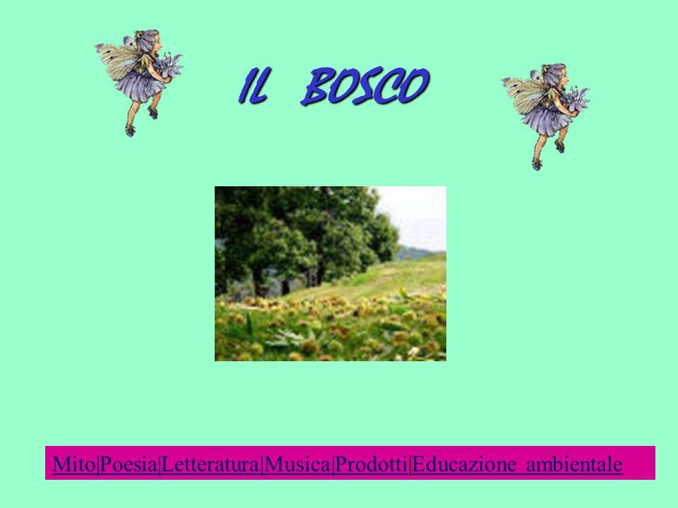 IL BOSCO Mito|Poesia|Letteratura|Musica|ProdottiMito|Poesia|Letteratura|Musica|Prodotti|Educazione ambientaleEducazione ambientale