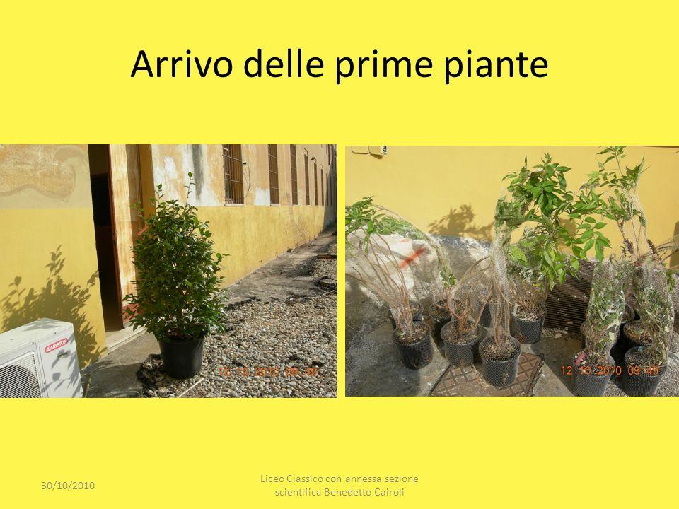 Arrivo delle prime piante 30/10/2010 Liceo Classico con annessa sezione scientifica Benedetto Cairoli