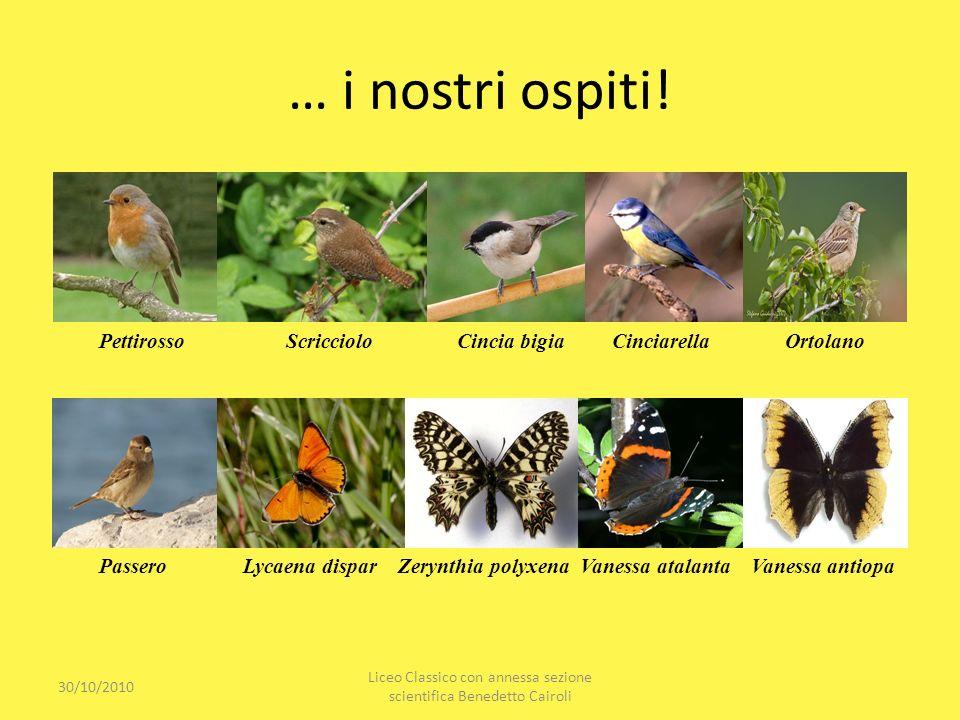… i nostri ospiti! 30/10/2010 Liceo Classico con annessa sezione scientifica Benedetto Cairoli Pettirosso Scricciolo Cincia bigia Cinciarella Ortolano