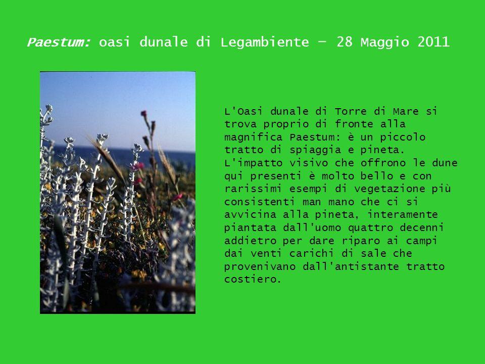 Paestum: oasi dunale di Legambiente – 28 Maggio 2011 L'Oasi dunale di Torre di Mare si trova proprio di fronte alla magnifica Paestum: è un piccolo tr