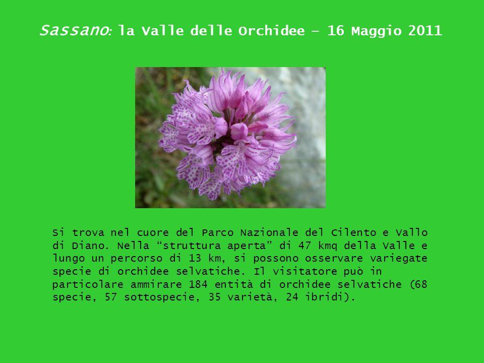 Sassano : la Valle delle Orchidee – 16 Maggio 2011 Si trova nel cuore del Parco Nazionale del Cilento e Vallo di Diano. Nella struttura aperta di 47 k