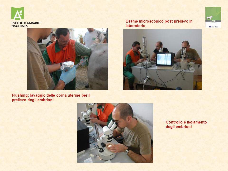Flushing: lavaggio delle corna uterine per il prelievo degli embrioni Esame microscopico post prelievo in laboratorio Controllo e isolamento degli emb
