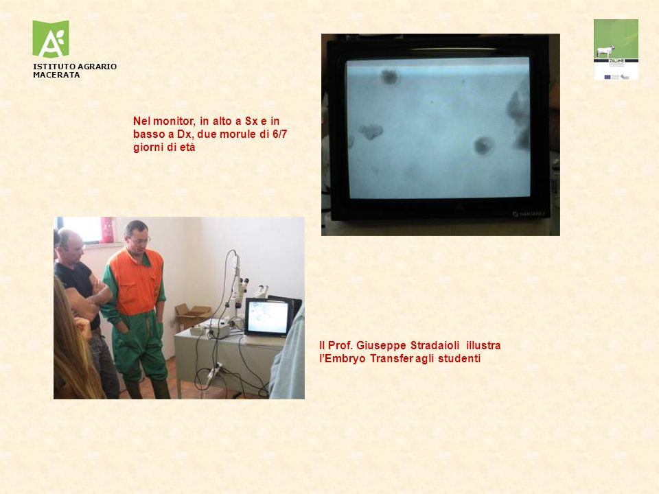 Nel monitor, in alto a Sx e in basso a Dx, due morule di 6/7 giorni di età Il Prof. Giuseppe Stradaioli illustra lEmbryo Transfer agli studenti ISTITU