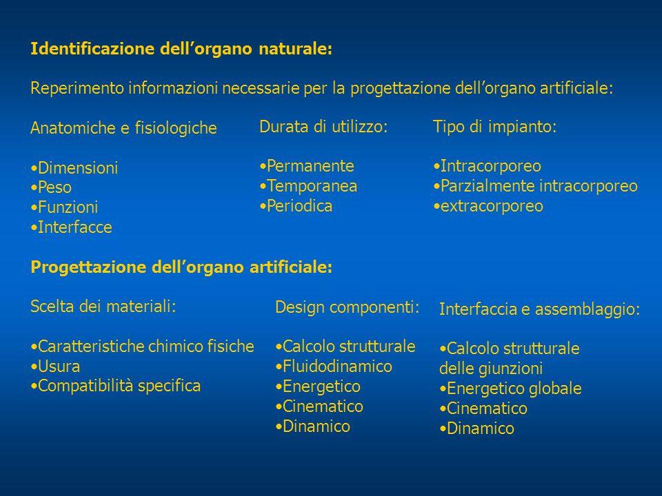 Identificazione dellorgano naturale: Reperimento informazioni necessarie per la progettazione dellorgano artificiale: Anatomiche e fisiologiche Dimens