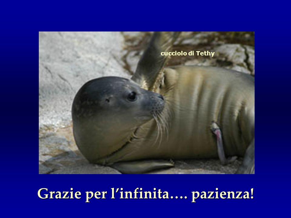cucciolo di Tethy Grazie per linfinita…. pazienza!