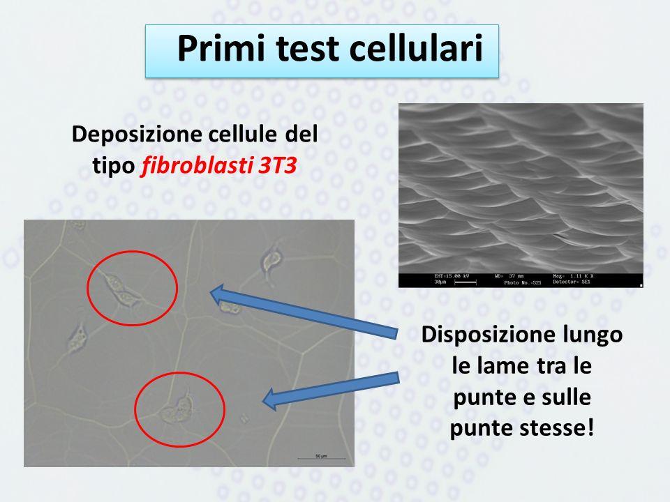 Primi test cellulari Deposizione cellule del tipo fibroblasti 3T3 Disposizione lungo le lame tra le punte e sulle punte stesse!