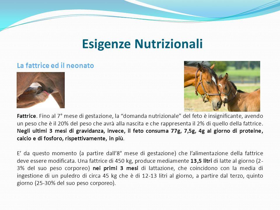 Esigenze Nutrizionali La fattrice ed il neonato Fattrice.