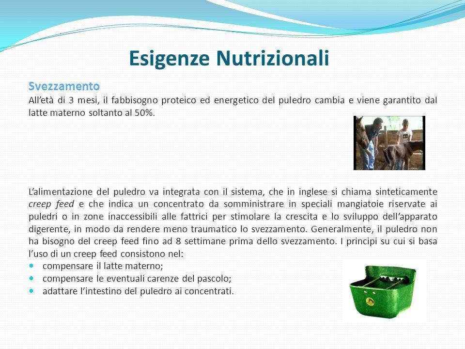 Esigenze Nutrizionali Svezzamento Alletà di 3 mesi, il fabbisogno proteico ed energetico del puledro cambia e viene garantito dal latte materno soltanto al 50%.
