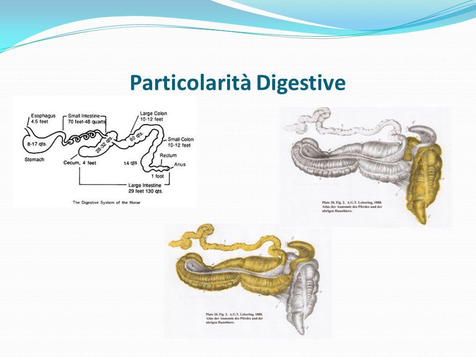 Particolarità Digestive