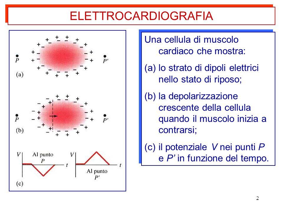 2 Una cellula di muscolo cardiaco che mostra: (a)lo strato di dipoli elettrici nello stato di riposo; (b)la depolarizzazione crescente della cellula q