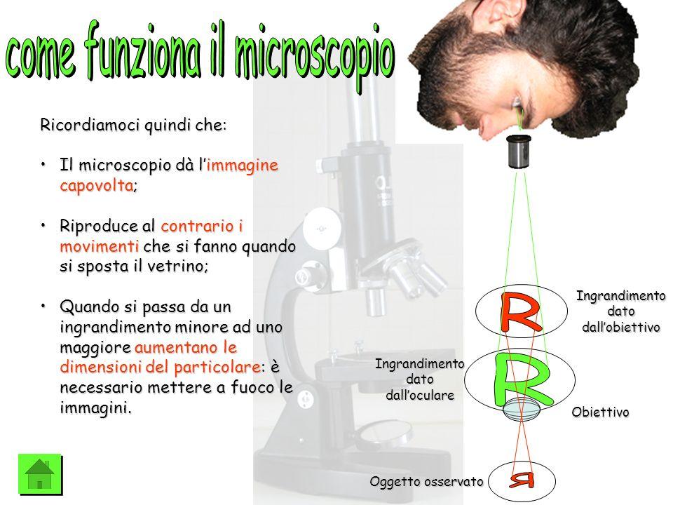 Oggetto osservato Obiettivo Ingrandimento dato dallobiettivo Ingrandimento dato dalloculare Ricordiamoci quindi che: Il microscopio dà limmagine capov