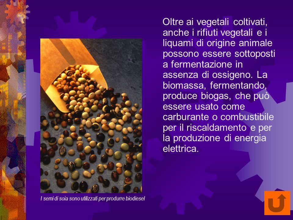Oltre ai vegetali coltivati, anche i rifiuti vegetali e i liquami di origine animale possono essere sottoposti a fermentazione in assenza di ossigeno.