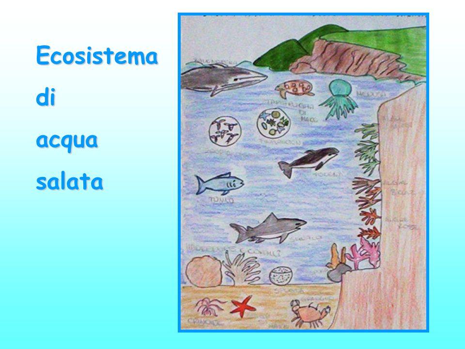 Ecosistemadiacquasalata