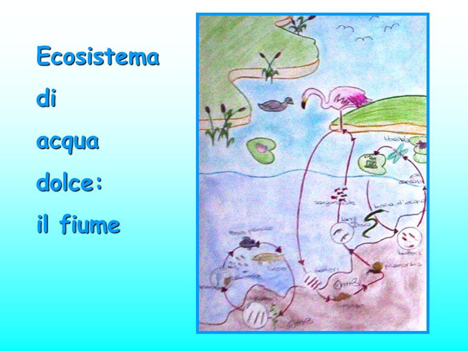 Ecosistemadiacquadolce: il fiume