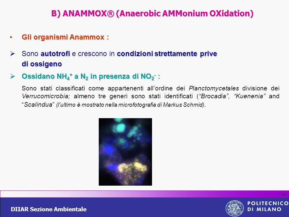 DIIAR Sezione Ambientale 30 Gli organismi Anammox :Gli organismi Anammox : autotrofi condizionistrettamente prive Sono autotrofi e crescono in condizi