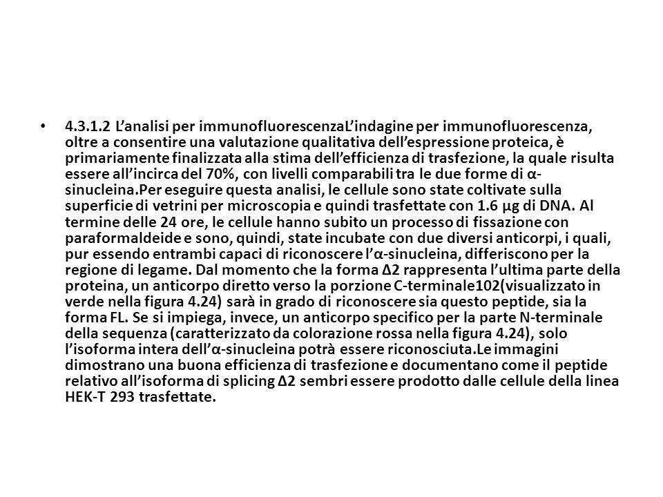 4.3.1.2 Lanalisi per immunofluorescenzaLindagine per immunofluorescenza, oltre a consentire una valutazione qualitativa dellespressione proteica, è pr