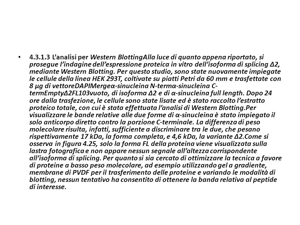 4.3.1.3 Lanalisi per Western BlottingAlla luce di quanto appena riportato, si prosegue lindagine dellespressione proteica in vitro dellisoforma di spl
