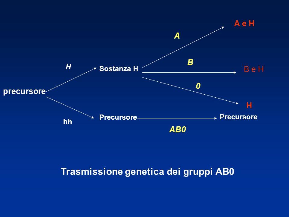 precursore H hh Sostanza H Precursore A B 0 AB0 A e H B e H H Precursore Trasmissione genetica dei gruppi AB0