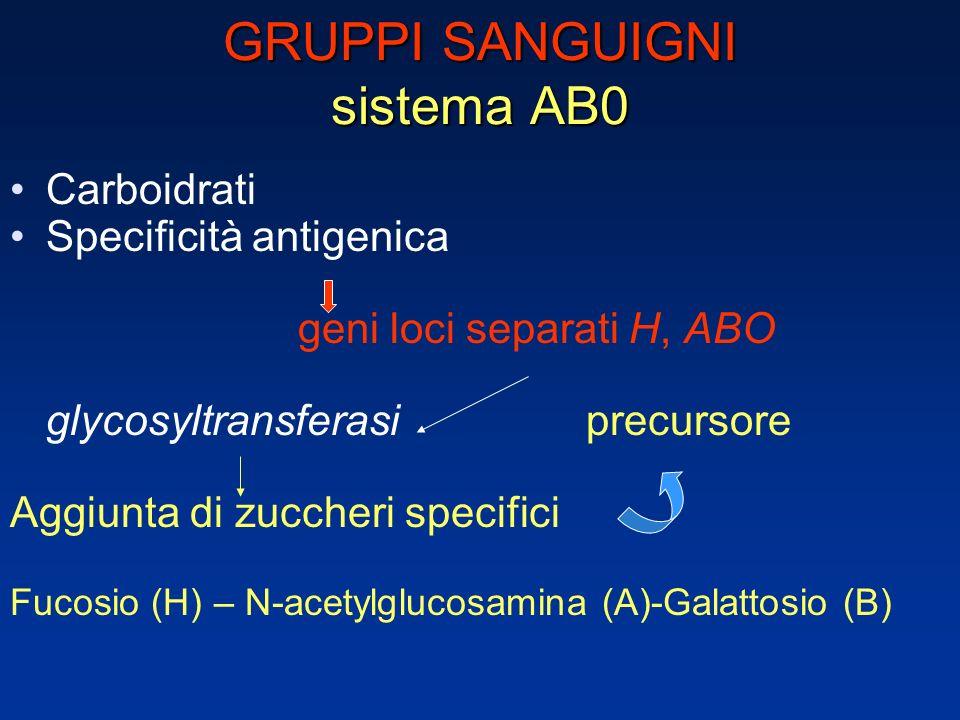 GRUPPI SANGUIGNI sistema AB0 Carboidrati Specificità antigenica geni loci separati H, ABO glycosyltransferasi precursore Aggiunta di zuccheri specifici Fucosio (H) – N-acetylglucosamina (A)-Galattosio (B)
