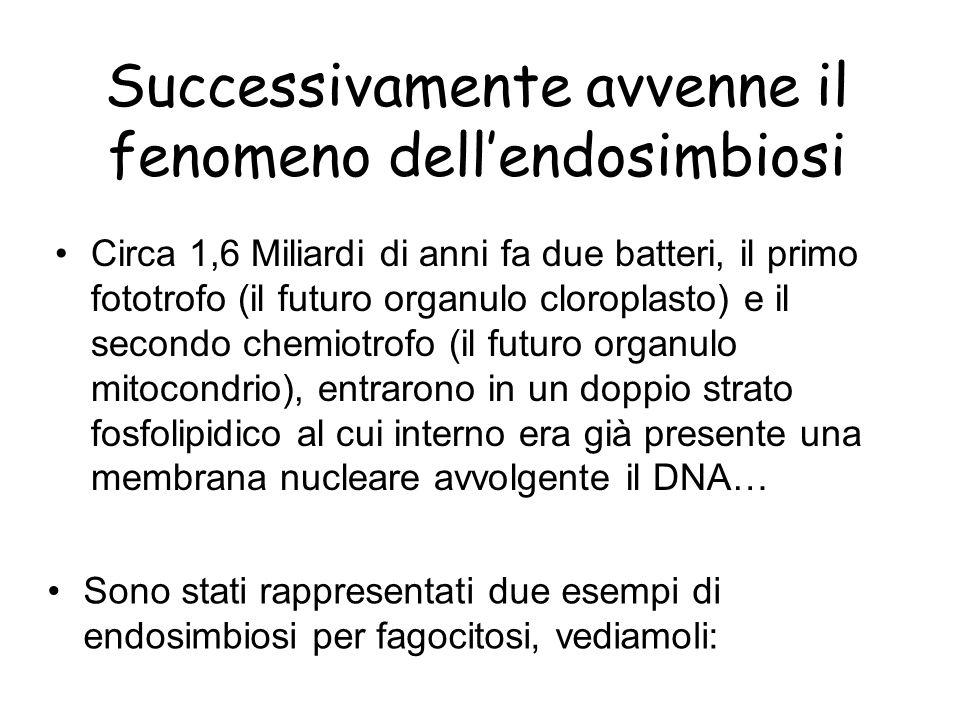 Endosimbiosi per fagocitosi 1 Un possibile meccanismo per lendosimbiosi.