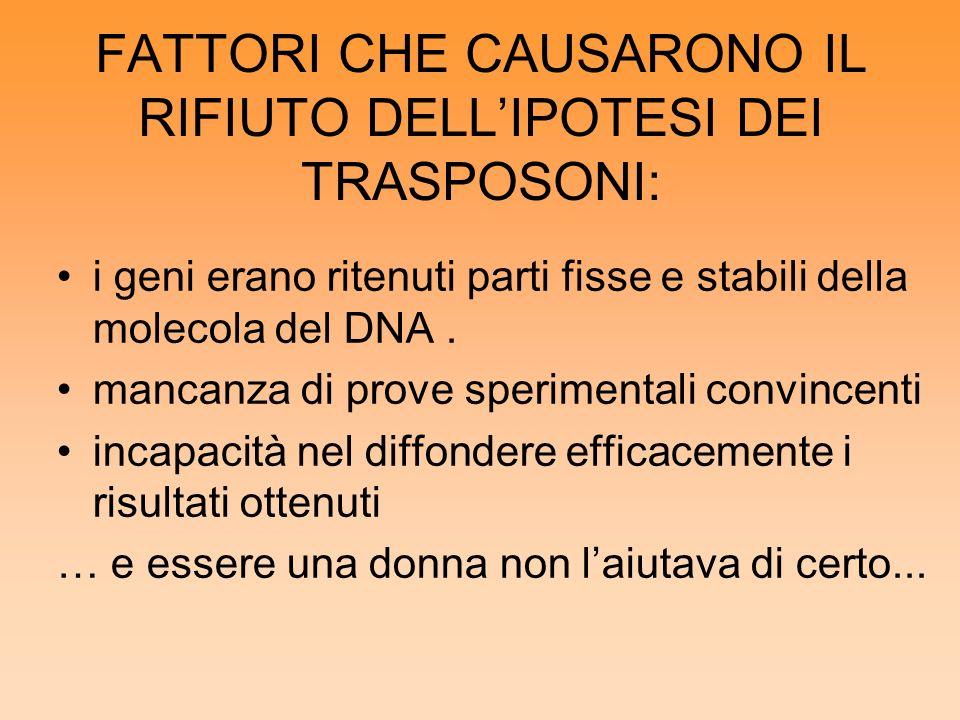 FATTORI CHE CAUSARONO IL RIFIUTO DELLIPOTESI DEI TRASPOSONI: i geni erano ritenuti parti fisse e stabili della molecola del DNA. mancanza di prove spe