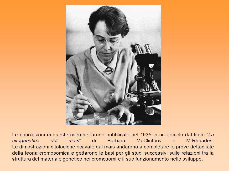 Le conclusioni di queste ricerche furono pubblicate nel 1935 in un articolo dal titolo La citogenetica del mais di Barbara McClintock e M.Rhoades. Le