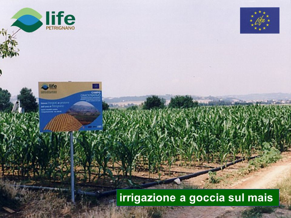 irrigazione a goccia sul mais