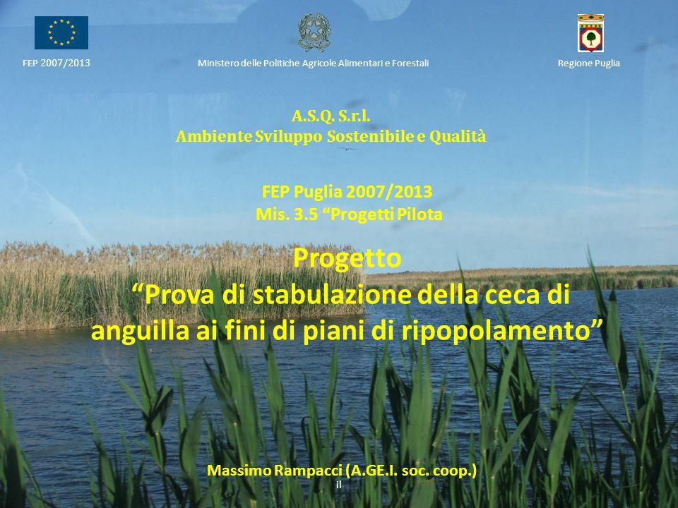 A.S.Q. S.r.l. Ambiente Sviluppo Sostenibile e Qualità FEP 2007/2013 Ministero delle Politiche Agricole Alimentari e ForestaliRegione Puglia FEP Puglia