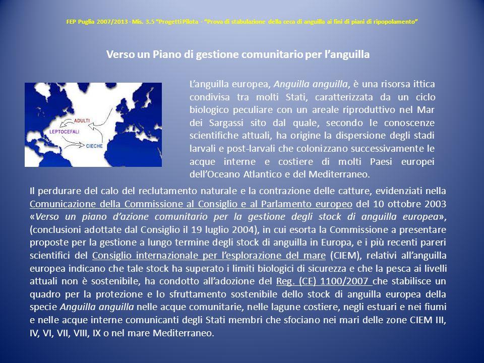 FEP Puglia 2007/2013 - Mis. 3.5 Progetti Pilota - Prova di stabulazione della ceca di anguilla ai fini di piani di ripopolamento Verso un Piano di ges