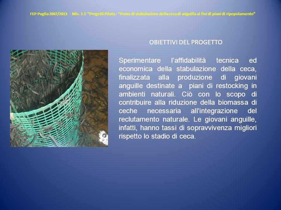 FEP Puglia 2007/2013 - Mis. 3.5 Progetti Pilota - Prova di stabulazione della ceca di anguilla ai fini di piani di ripopolamento Sperimentare laffidab