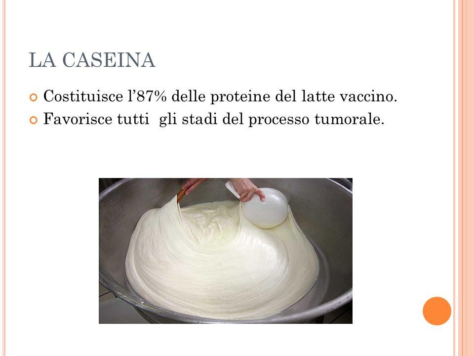 LA CASEINA Costituisce l87% delle proteine del latte vaccino. Favorisce tutti gli stadi del processo tumorale.