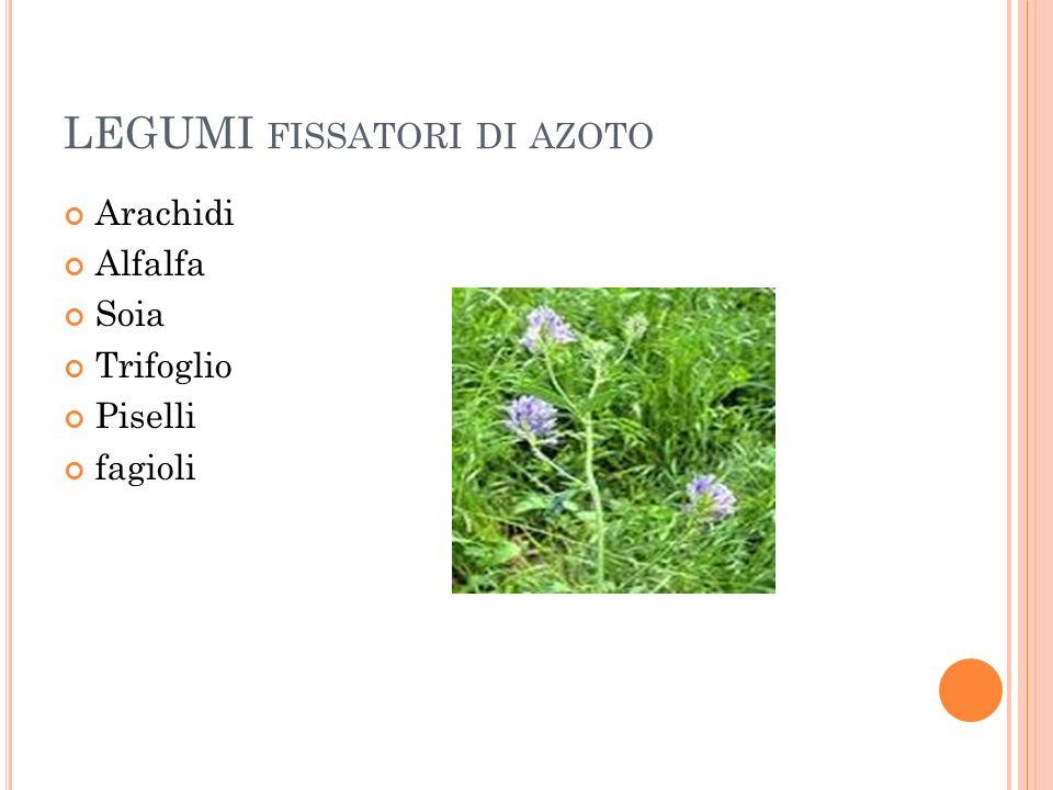 LEGUMI FISSATORI DI AZOTO Arachidi Alfalfa Soia Trifoglio Piselli fagioli