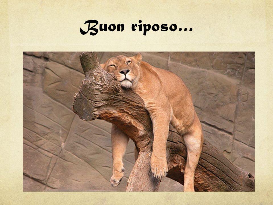 Buon riposo…