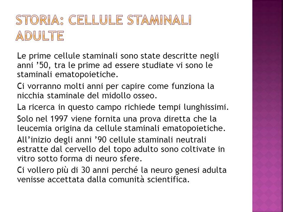 Le prime cellule staminali sono state descritte negli anni 50, tra le prime ad essere studiate vi sono le staminali ematopoietiche. Ci vorranno molti