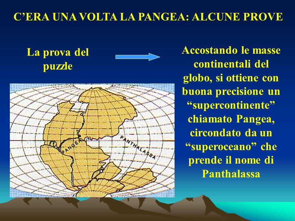 La prova del puzzle Accostando le masse continentali del globo, si ottiene con buona precisione un supercontinente chiamato Pangea, circondato da un s