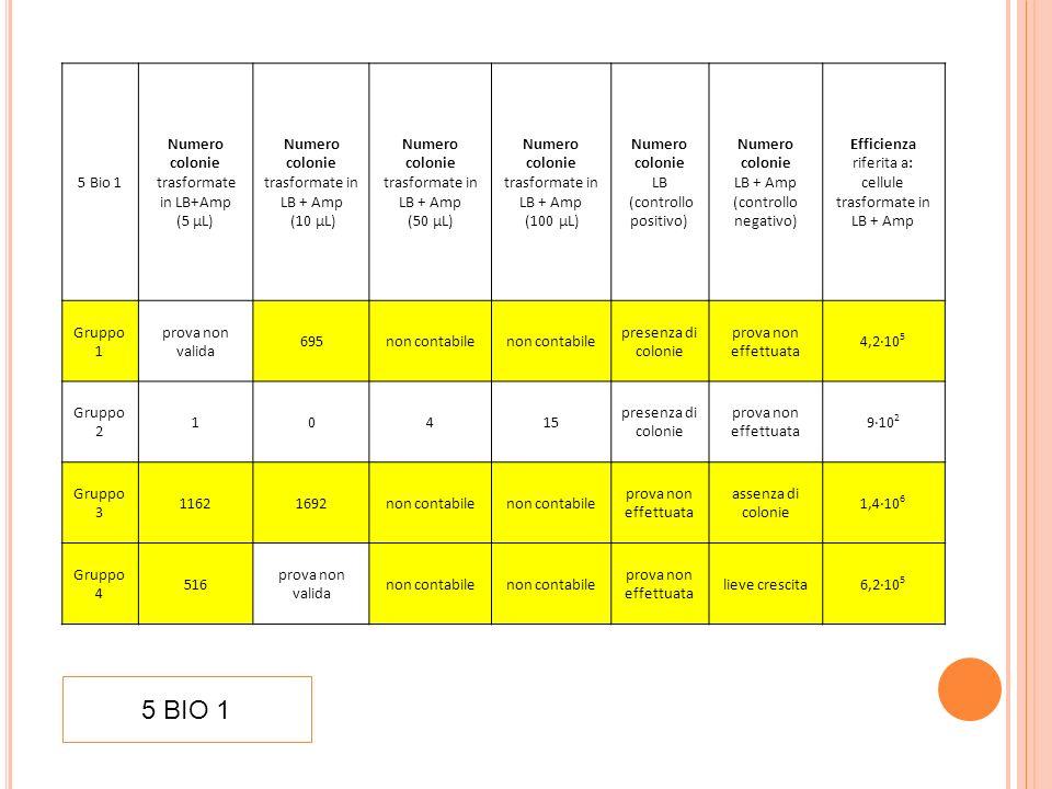 5 Bio 2 Numero colonie trasformate in LB + Amp (10 µL) Numero colonie trasformate in LB+ Amp (100 µL) Numero colonie LB (controllo positivo) Numero colonie LB + Amp (controllo negativo) Efficienza riferita a: cellule trasformate in LB + Amp (10 µL) Gruppo 1 1616non contabilepresenza di colonieassenza di colonie9,6·10 5 Gruppo 2 2424non contabilepresenza di colonieassenza di colonie1,4·10 7 Gruppo 3 967non contabilepresenza di colonieassenza di colonie5,8·10 5 Gruppo 4 800non contabilepresenza di colonieassenza di colonie4,8·10 5 5 BIO 2